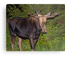 Nightwalker: Bull Moose Metal Print