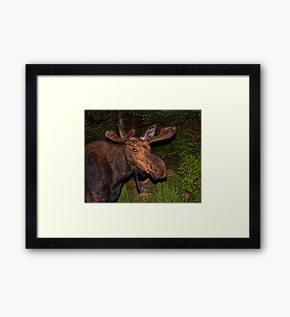 Eyes of the Night: Bull Moose Framed Print