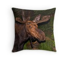 Eyes of the Night: Bull Moose Throw Pillow