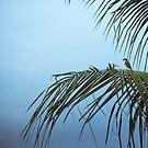 Hummingbird by ghastly