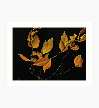 Dried Leaves Art Print