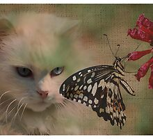 Flight of Fantasy by FelicityB