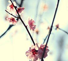 My spring by Beata  Czyzowska Young