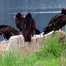 Peace Eagles by Jan Landers