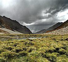 nubra grasslands. ladakh, north india by tim buckley | bodhiimages