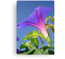 Close Up Of Ipomoea with Leaf and Sky Background Canvas Print