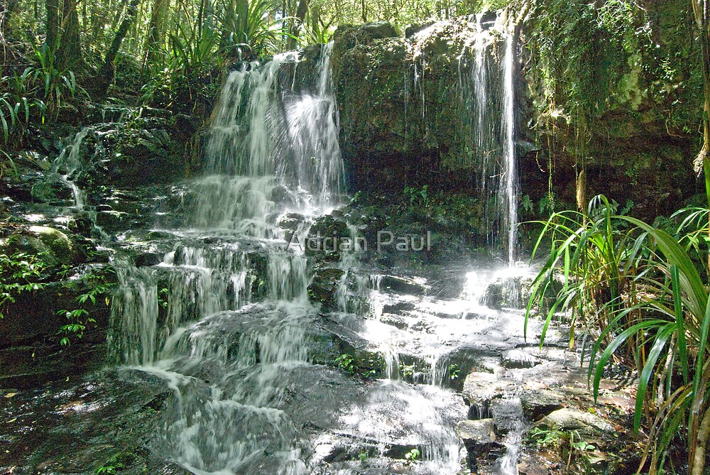 Waterfall, Lamington National Park, Queensland, Australia by Adrian Paul
