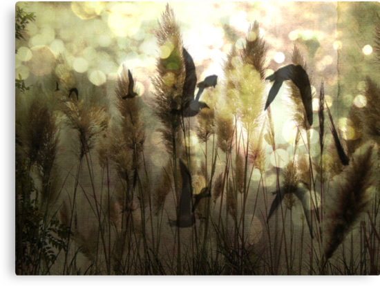 Twilight Flight by Anne  McGinn