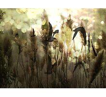 Twilight Flight Photographic Print