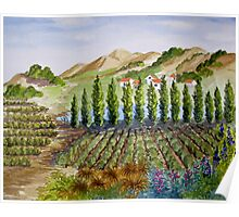 Sonoma Vineyards Poster