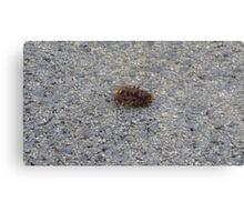 A dying hornet n°3 Canvas Print