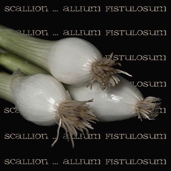 Scallion ~ allium fistulosum by Rosalie Dale