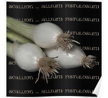Scallion ~ allium fistulosum Poster