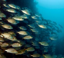 Schooling Fish by Greg Amptman