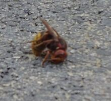 A dying hornet n°2 by edend