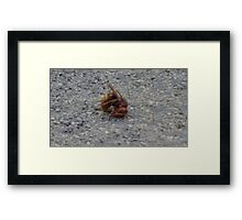 A dying hornet n°2 Framed Print