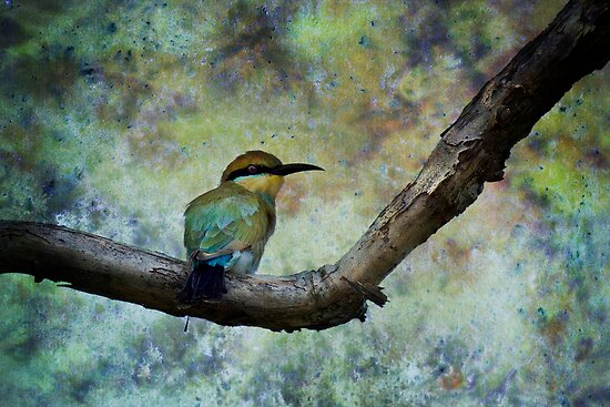 Rainbow bee-eater.  by DaveBassett