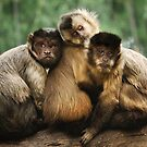 Three Wise Monkeys by Heather Prince