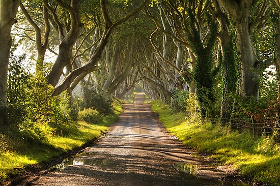 The Dark Hedges by Chris Tait