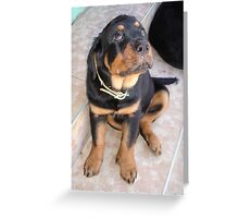 It Wasn't Me - Rottweiler Puppy Greeting Card
