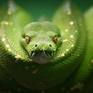 Python by Martina Cross