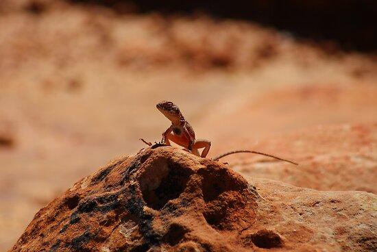 Lizard on a rock by Eric Belcher