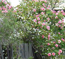 my wild garden by betty porteus