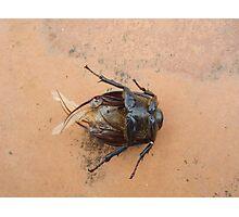 cockroach Photographic Print