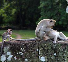 Monkeys of Angkor Wat III - Cambodia. by Tiffany Lenoir