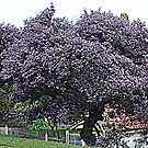 Purple Tree                                                                                                     from near me by KazM