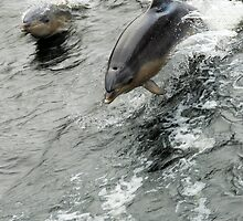 Dolphins by Werner Padarin