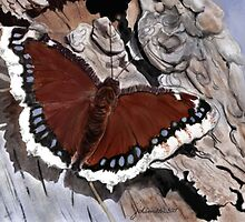 Cloak of Mourning Butterfly by Joan A Hamilton