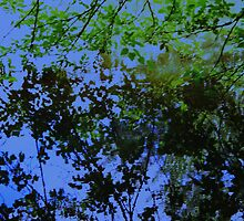 Tree Reflection by schiabor