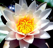 Lilly Pad Flower by Jennie-Hope