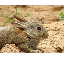 sweet baby bunny Photographic Print