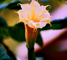 Nature's Trumpet by Daneann