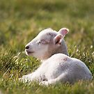 Young Lamb #1 by Christopher Cullen