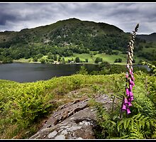 Foxglove above Rydal water by Shaun Whiteman