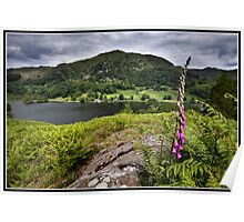 Foxglove above Rydal water Poster