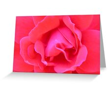 Red rose pedals Greeting Card
