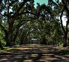 Rosedown Plantation by steini