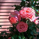 ROSES II by Jimmy Joe
