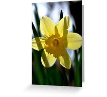 Daffodil Transparent Greeting Card