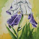 Informally Divine Iris by Brenda Dow