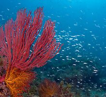 Soft Coral in the Sea of Cortez by Greg Amptman
