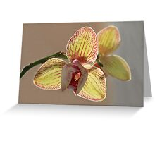 Shy Orchid Flower Greeting Card