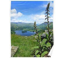 The Lake District: Nearly in Bloom Poster