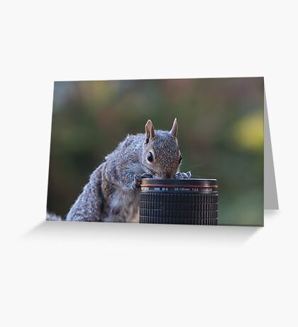 Cute Grey squirrel peeking into camera lens Greeting Card
