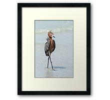 Goofy looking Egret Framed Print
