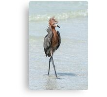 Goofy looking Egret Canvas Print